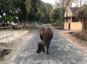 ayurveda_India-xuanlanyoga